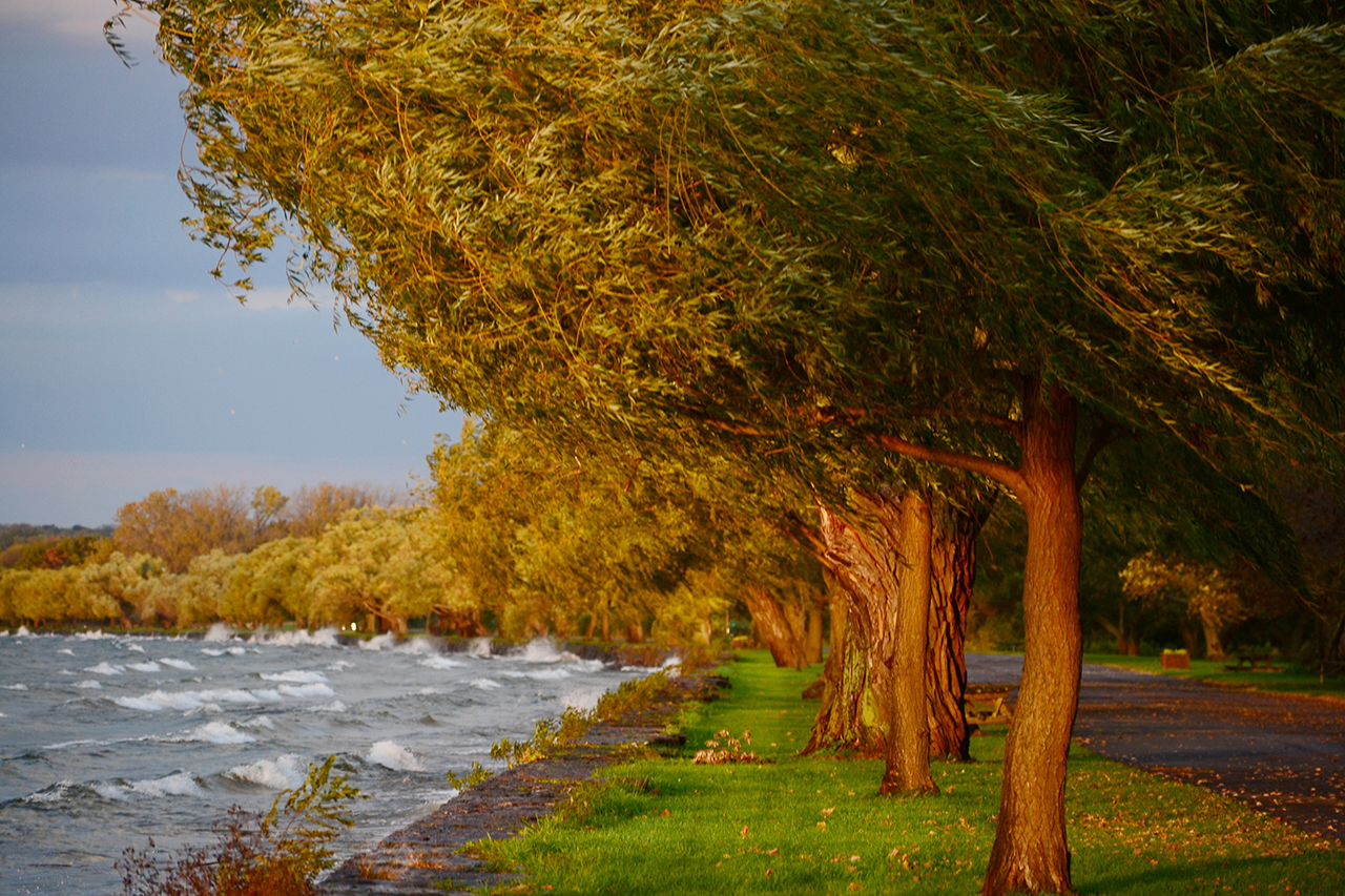 Morning Lake Front in Cayuga County (photo)