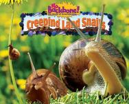 Cover of: Creeping land snails